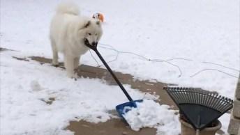 Coisas Engraçadas Que Os Cachorros Fazem Na Neve, Impossível Não Rir!