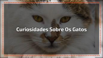 Coisas Que Talvez Você Não Saiba Sobre Os Gatos, Um Animal Incrível!