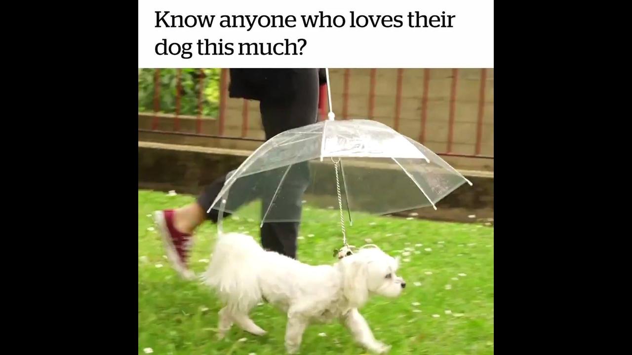 Coleira com guarda chuva embutido para proteger seu cachorro