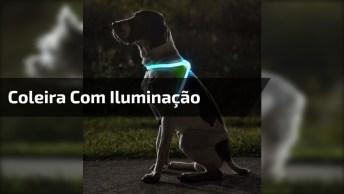 Coleira Com Iluminação Para Cachorros, Mais Uma Que Você Vai Gostar!