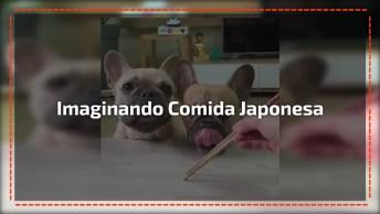 Comendo Comida Japonesa E Imaginária, Esses Cachorrinhos São Incríveis!