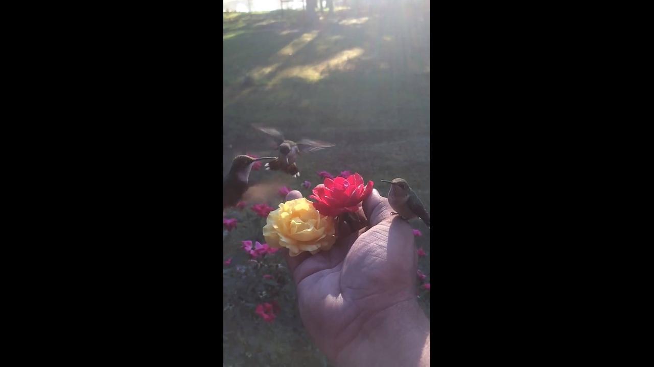 Como é lindo ver os beija-flores !! A natureza é perfeita é magica!