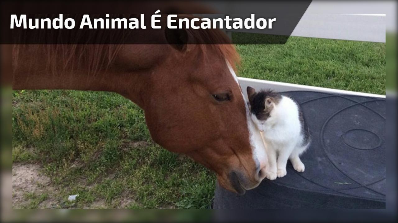 Mundo animal é encantador