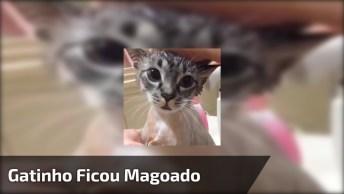 Como Os Animais São Fofos, Este Gatinho Ficou Magoado Com Sua Dona. Ele Magoo!