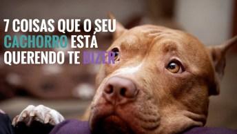 Como Sabe O Que Seu Cachorro Esta Querendo Dizer, 7 Dicas Importantíssimas!