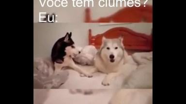 Como Seria Se Os Cachorros Pudessem Falar Em Uma Crise De Ciúmes Hahaha!