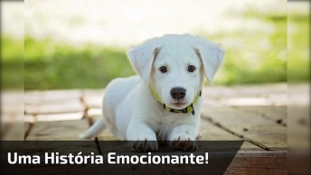 Como Seria Se Um Cachorro Pudesse Falar? Uma História Emocionante!