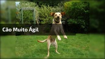 Como Treinar Seu Cachorro A Voar Hahaha, Esse Cão É Muito Ágil!