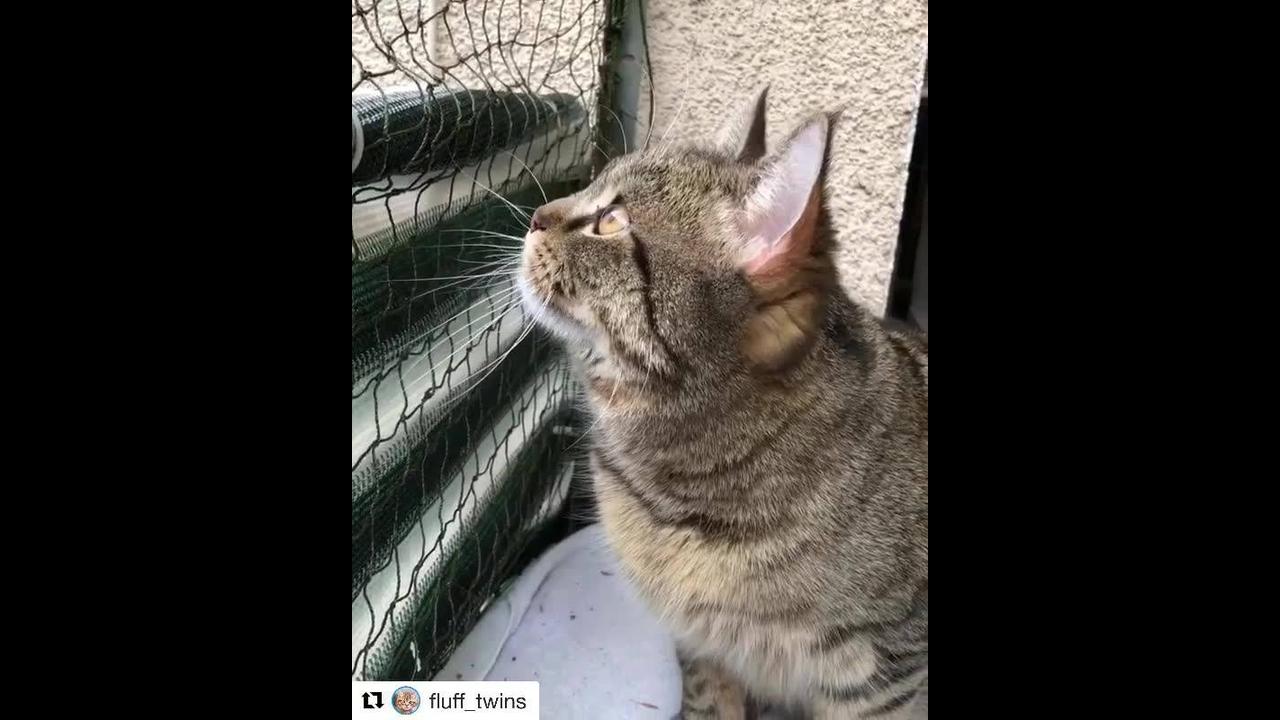 Como um gato fica quando ele avista uma presa