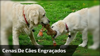 Compilação - Cenas De Cachorros Fazendo Coisas Fofas E Engraçadas, Confira!