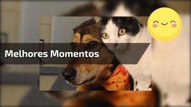 Compilação De Vídeos Engraçados De Gatos E Cachorros, Para Rir Muito!