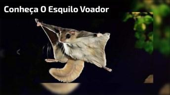Conheça O Esquilo Voador, Um Animal Com Habilidades Inscreveis!