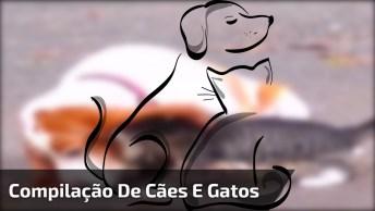 Convivência Entre Gatos E Cachorros, Você Vai Adorar Essa Compilação!