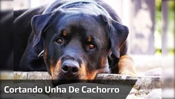 Cortando Unha De Cachorro De Grande Porte, Tem Que Ter Coragem!