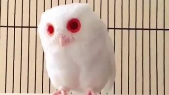 Coruja Albina De Olhos Vermelhos, Um Ser Extremamente Fantástico!