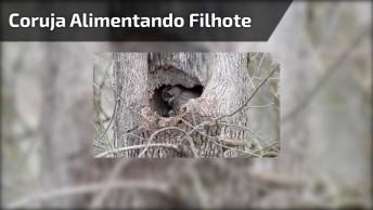Coruja Alimentando Seu Dentro Do Tronco De Uma Árvore Oca, Que Lindo!