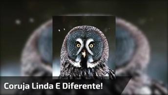 Coruja Linda E Diferente, Uma Imagem Que Merece Ser Compartilhada No Facebook!