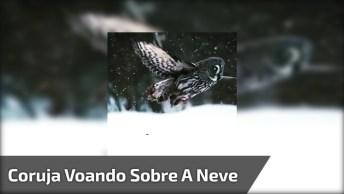 Coruja Voando Sobre O Cair Da Neve, Olha Só Que Linda Imagem!