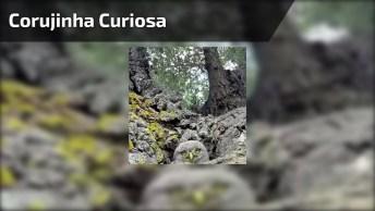 Corujinha Curiosa Bicando A Câmera, Que Criaturinha Mais Fofinha!