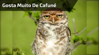 Corujinha Gosta Tanto De Cafuné Que Até Deita Para Trás, Que Animal Mais Fofo!