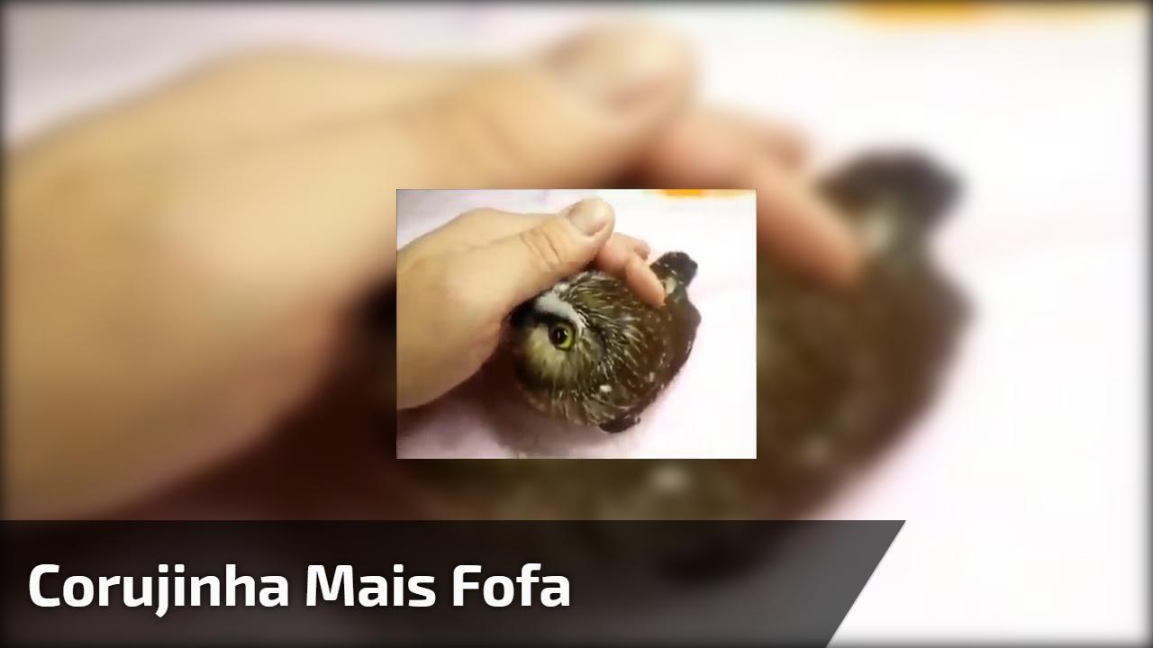 Corujinha mais fofa