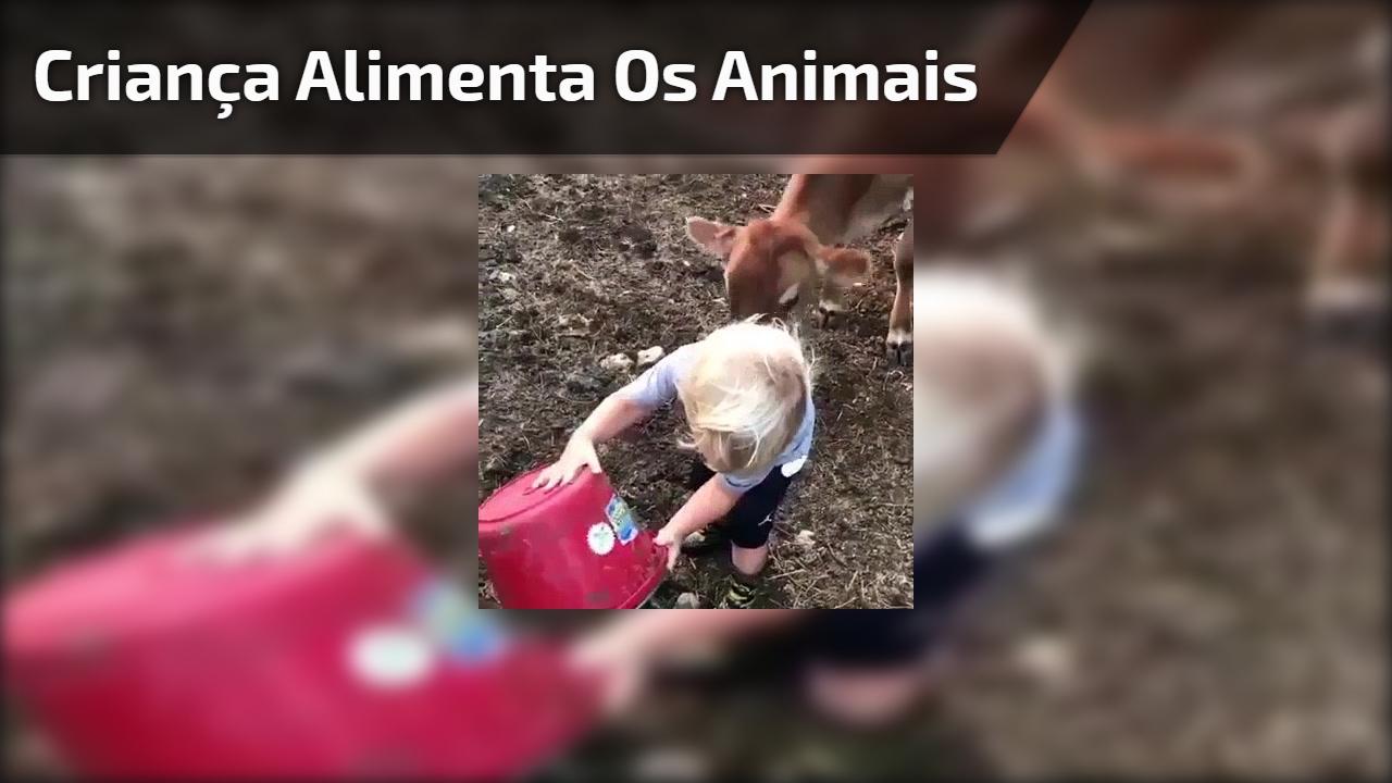 Criança alimenta os animais