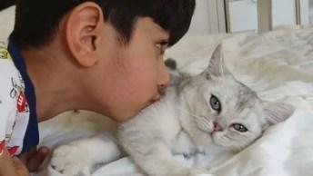 Criança Brincando Com Gato, Ensine Seu Filho A Respeitar Os Animais!