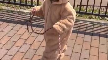 Criança Com Fantasia De Animal, Até Seu Cachorro Entrou Na Folia!