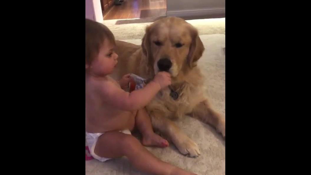 Criança dando comida para o cachorro...