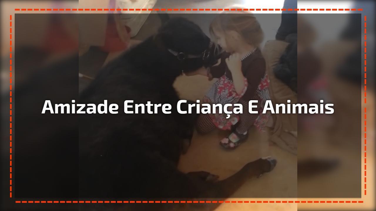 Amizade entre Criança e animais