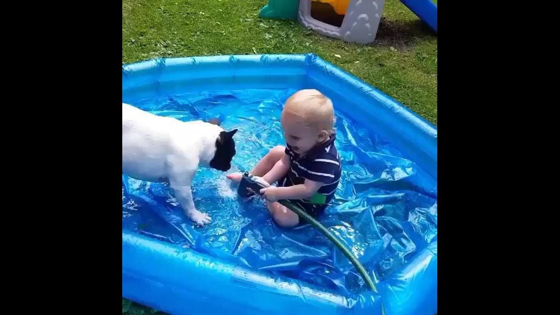 Criança e cachorro divertindo com água na piscina, é muita fofura!