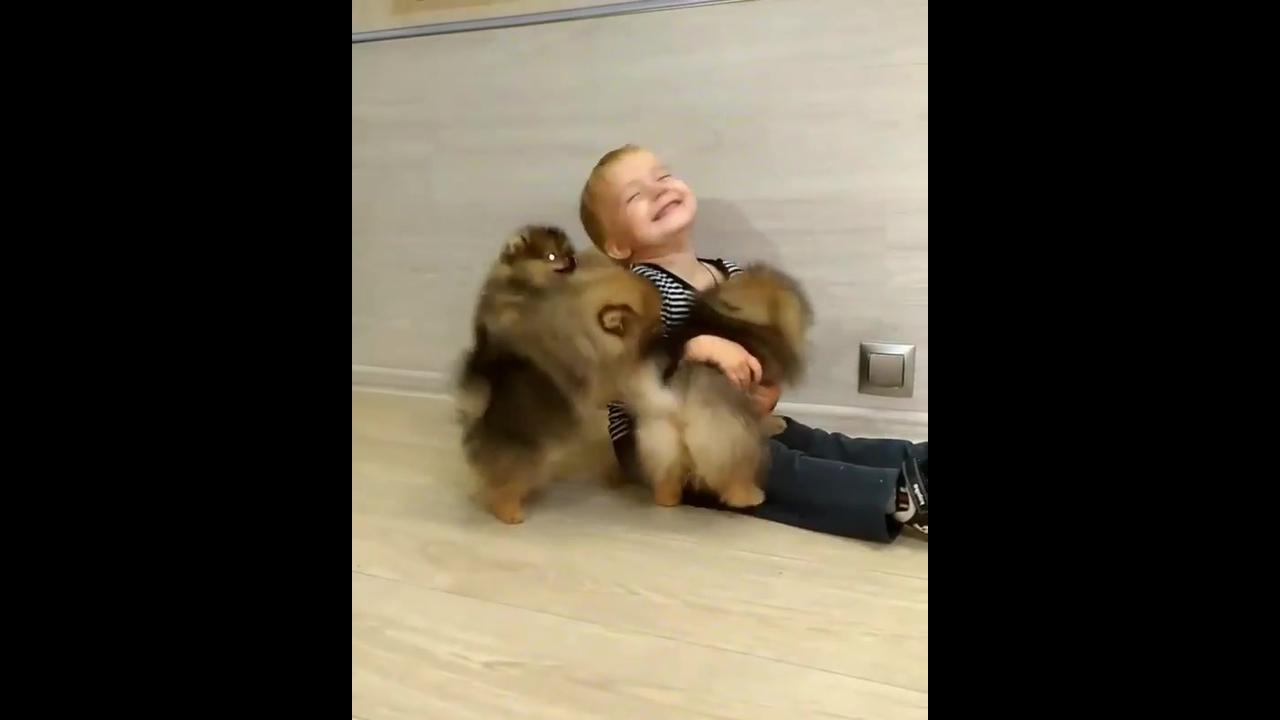 Criança se divertindo com lindos filhotes de cachorros