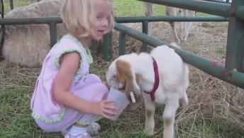 Crianças E Animais Uma Combinação Engraçada Com Toda Certeza