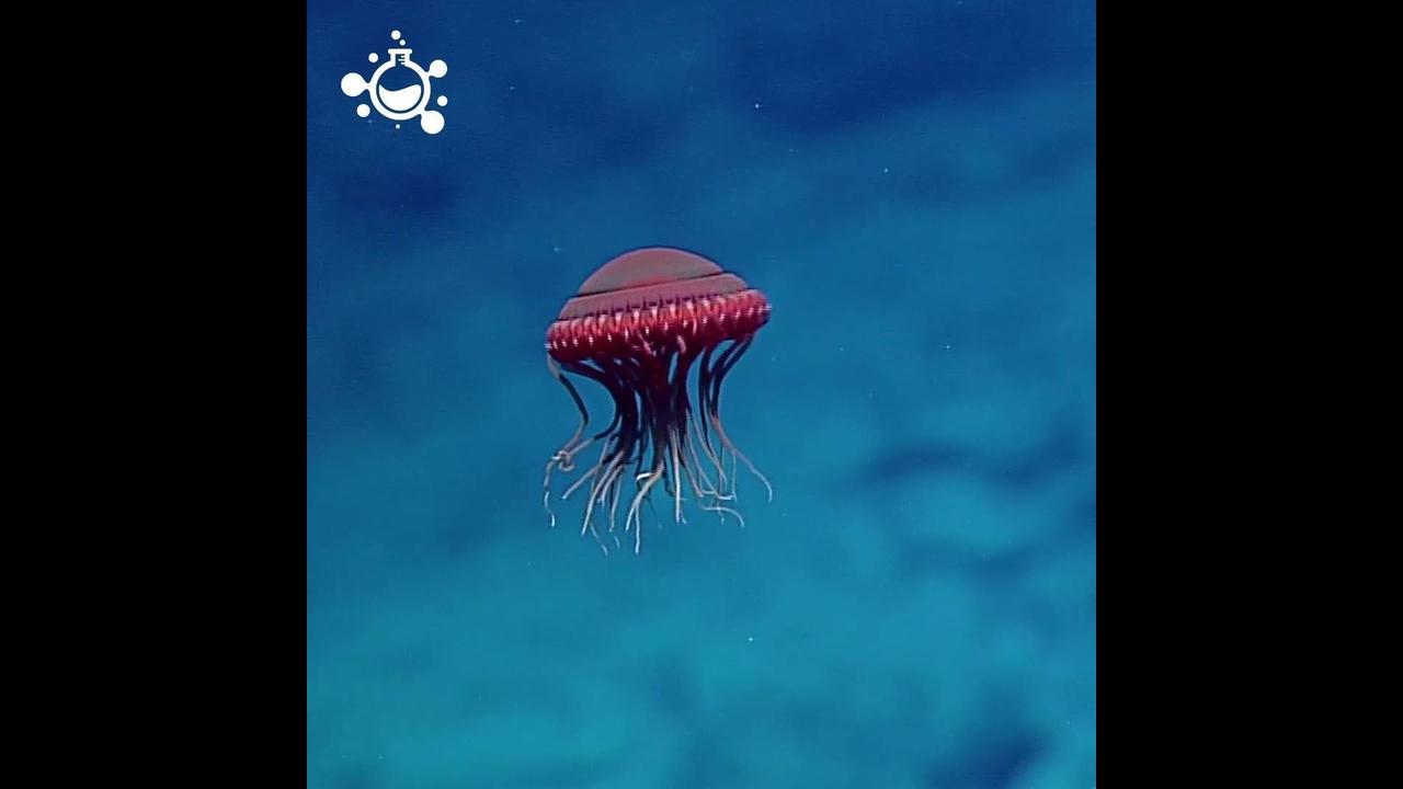 Criaturas marinhas impressionantes