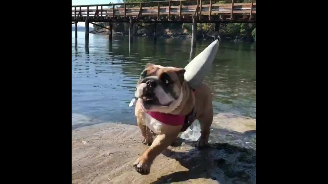 Cuidado com tubarão, hahaha! Com certeza é o tubarão mais fofo que você já viu!!