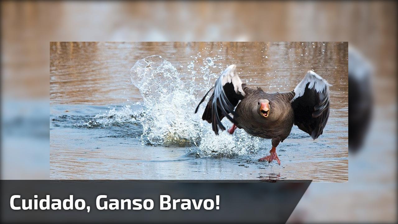 Cuidado, Ganso Bravo! E ele é tão bravo que destrói o anuncio hahaha!