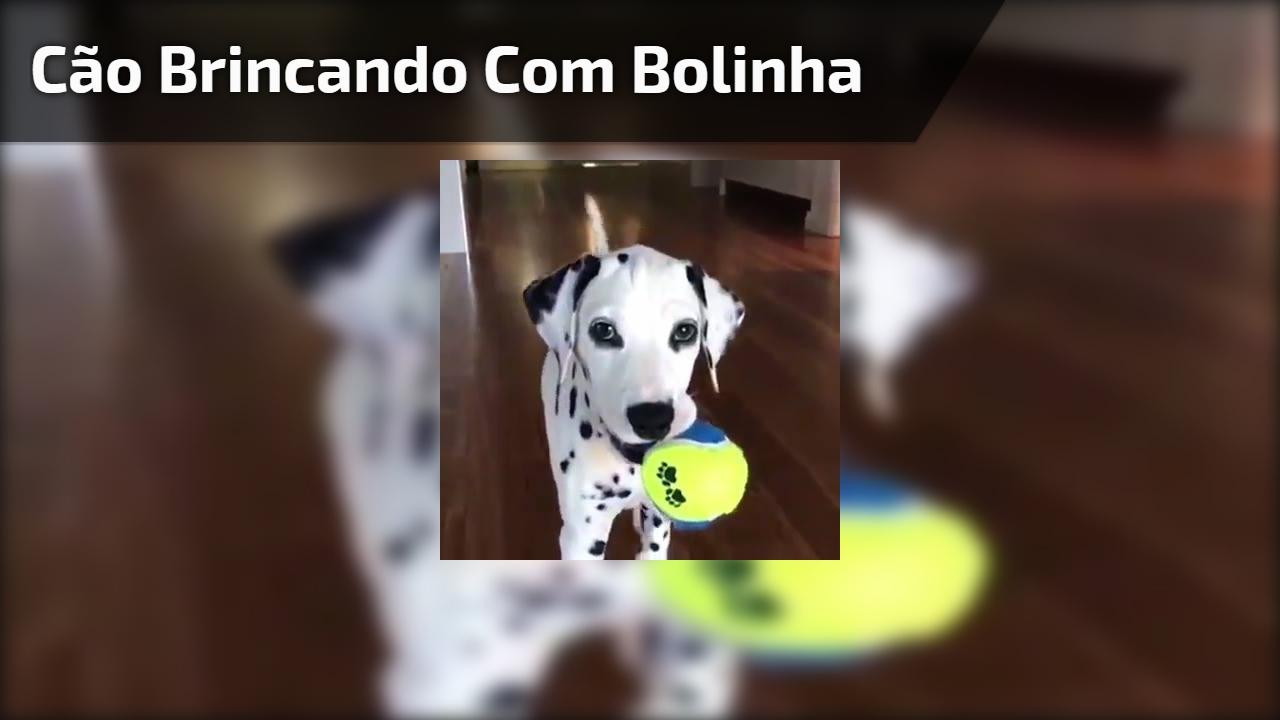 Cão brincando com bolinha