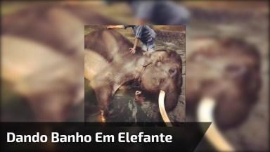 Dando Banho Em Um Elefante, Você Ainda Reclama De Dar Banho No Cachorro Hahaha!