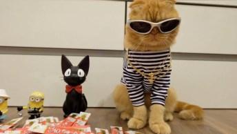 Descubra O Motivo Dos Gatos Serem Os Animais Mais Curiosos Do Mundo!