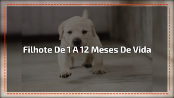 Desenvolvimento De Filhotes De Cachorros De Um A Doze Meses!