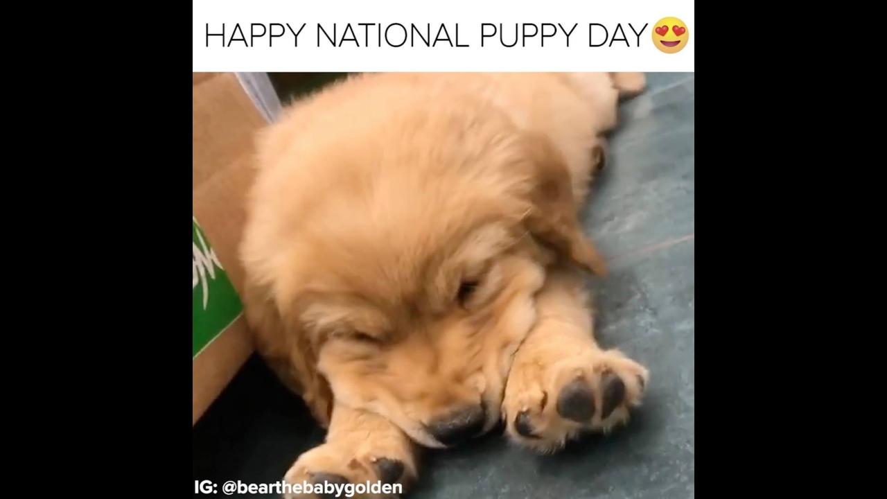 Dia do cachorro feliz é dia 23 de março