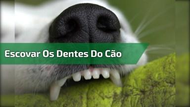 Dicas Para Escovar Os Dentes De Seu Cachorro, Muito Bom, Confira!
