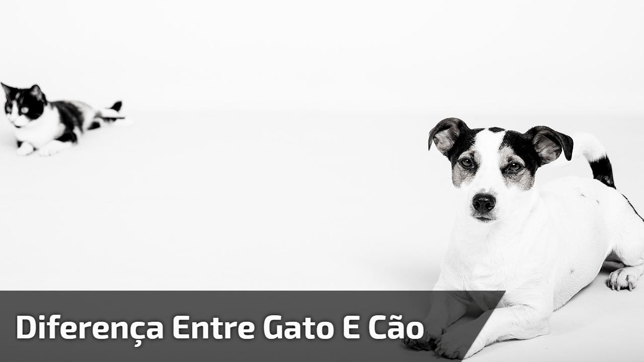 Diferença entre gato e cão
