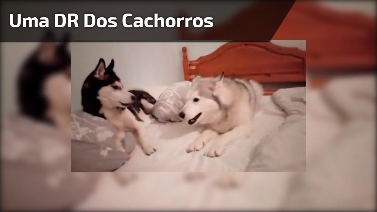 Uma DR dos cachorros