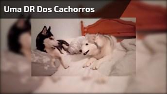 Discussão De Relacionamento Canina, Alguém Se Identifica?