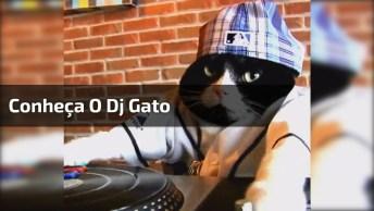 Dj Gato, Você Vai Se Apaixonar Por Ele, Confira E Compartilhe Com As Amigas!