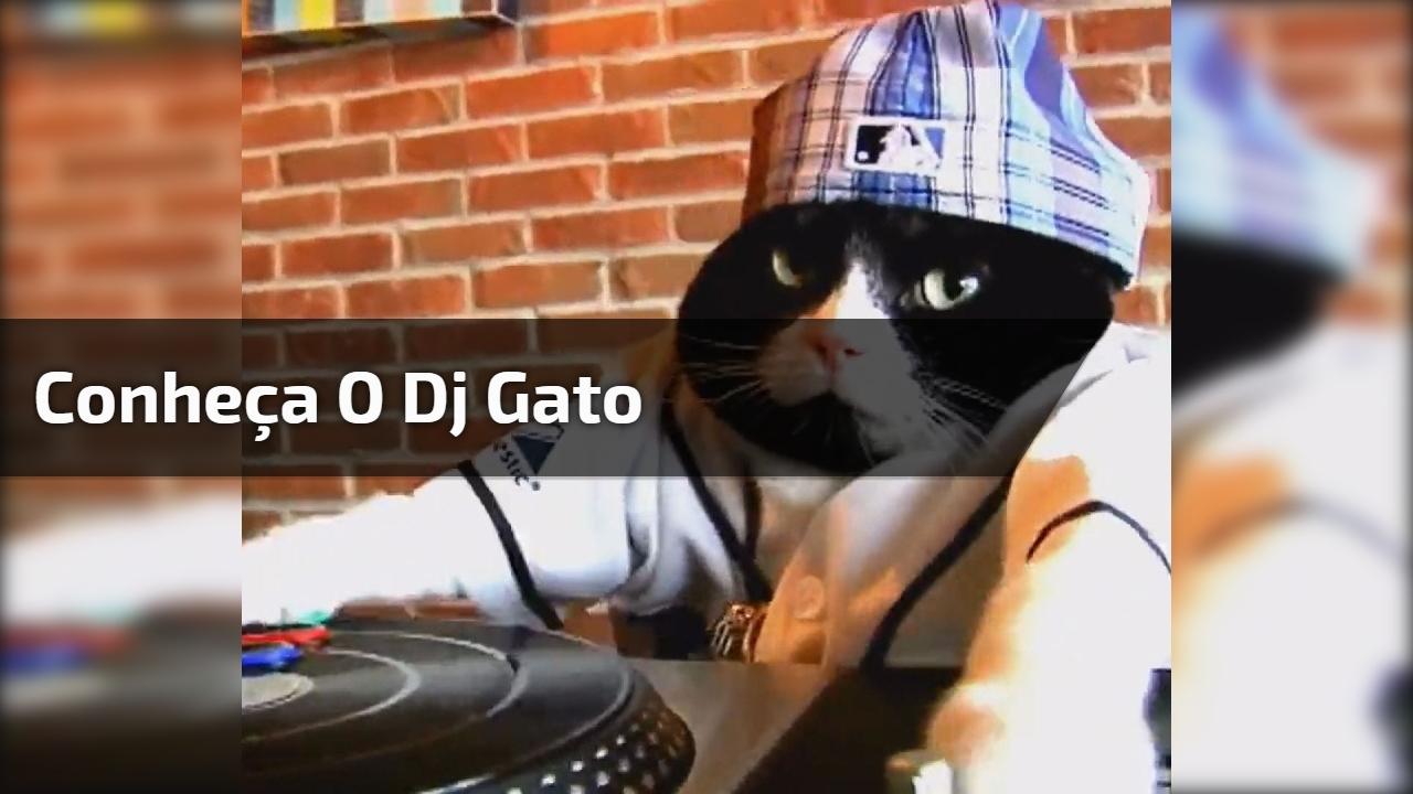 Conheça o Dj Gato