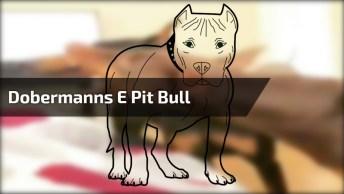 Dobermanns Brigando E Pit Bull Querendo Brincar, Só Na Paz!