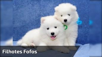 Dois Cachorros Brancos E Fofos Juntos, Que Filhotes Mais Lindos!