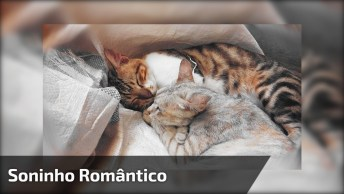 Dois Gatos Tirando Uma Soneca, O Vídeo Mais Romântico Que Você Vai Ver Hoje!